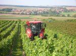 Culinair wijnfestijn in Eckelsheim