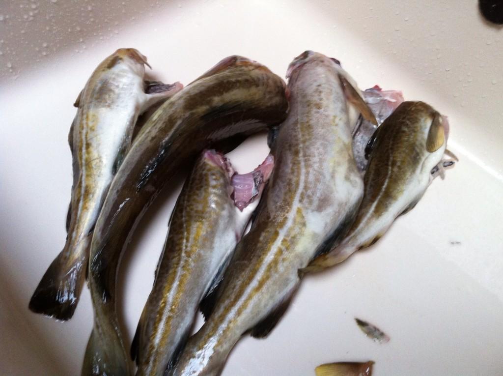 Een dagje zeevissen door Johan Verweij Keuken♥Liefde