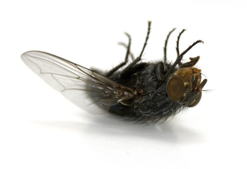 Nu op Huis- en Tuinliefde: Insecten werende tips!