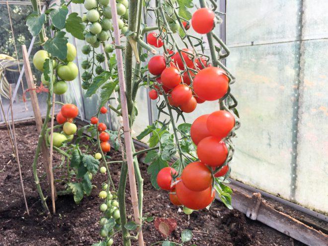 7 redenen om van tomaten te houden